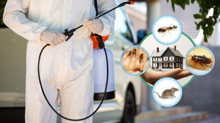 شركة مكافحة حشرات بالقصيم 0551438994 مكافحة النمل الابيض بالقصيم